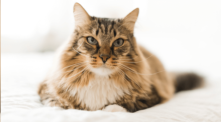 Adult Pet Care