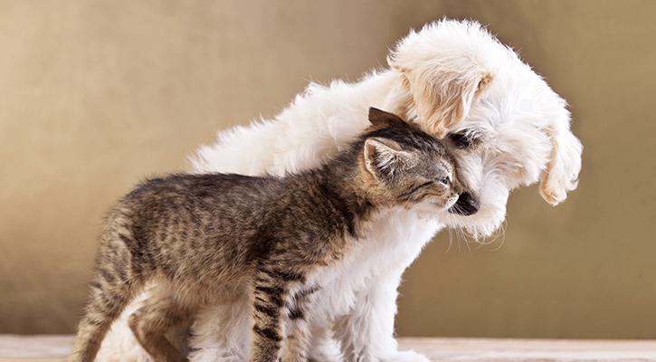 Puppy & Kitten Care